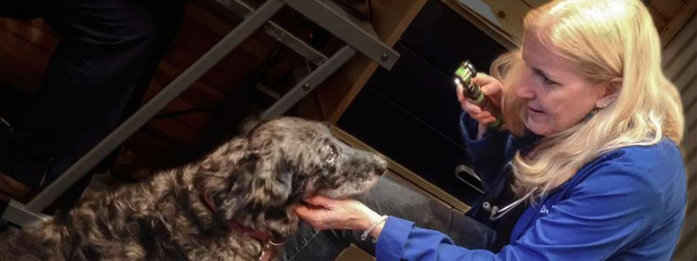 Dr. Barbara Royal, a female-presenting person with light skin and long blonde hair uses a device to check a brown and grey dog's eyes.