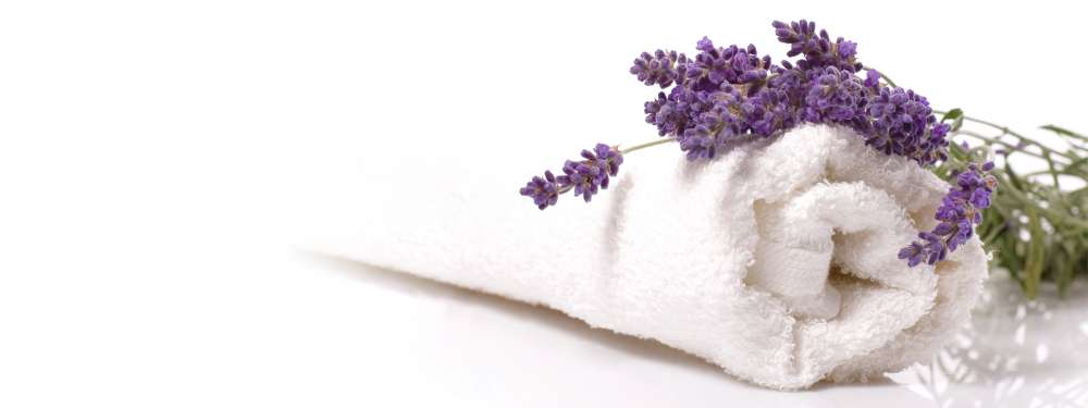 A lavender flower sits gently on a white towel against a white background.