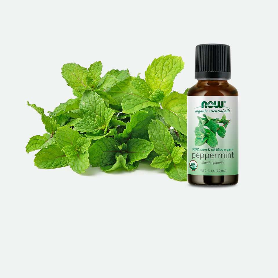Mint Scented Oils