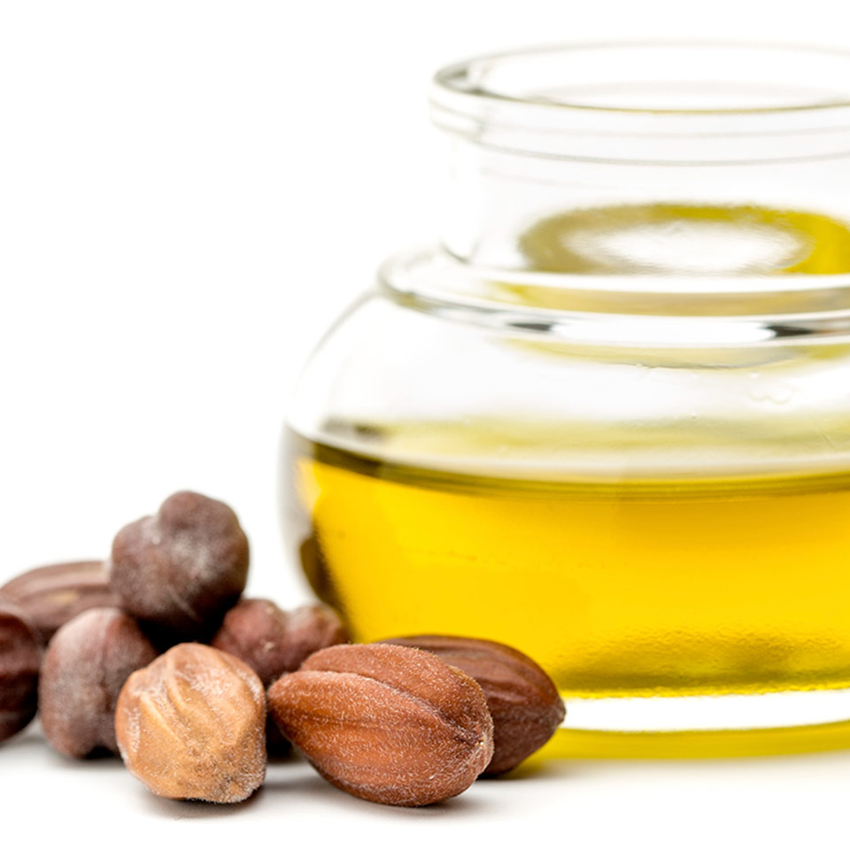 More About Jojoba Oil